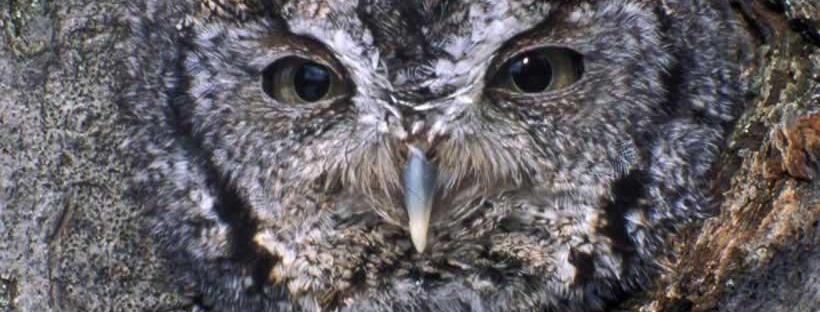 angry bird owl esoteric subliminal