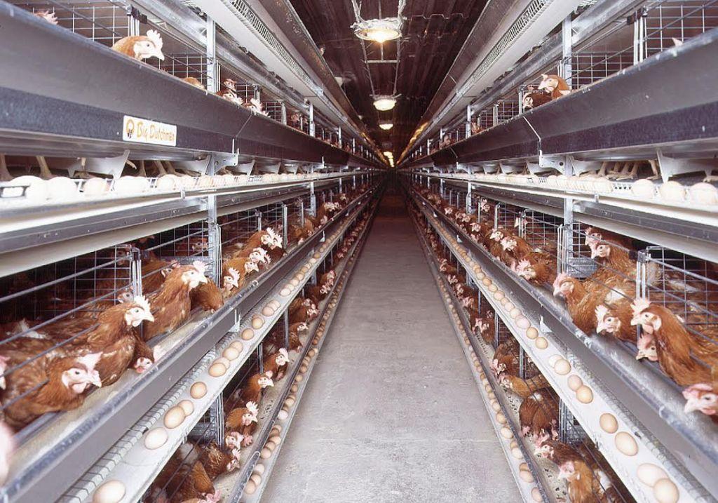 Corona Virus Figures Caged Humans Battery Farm